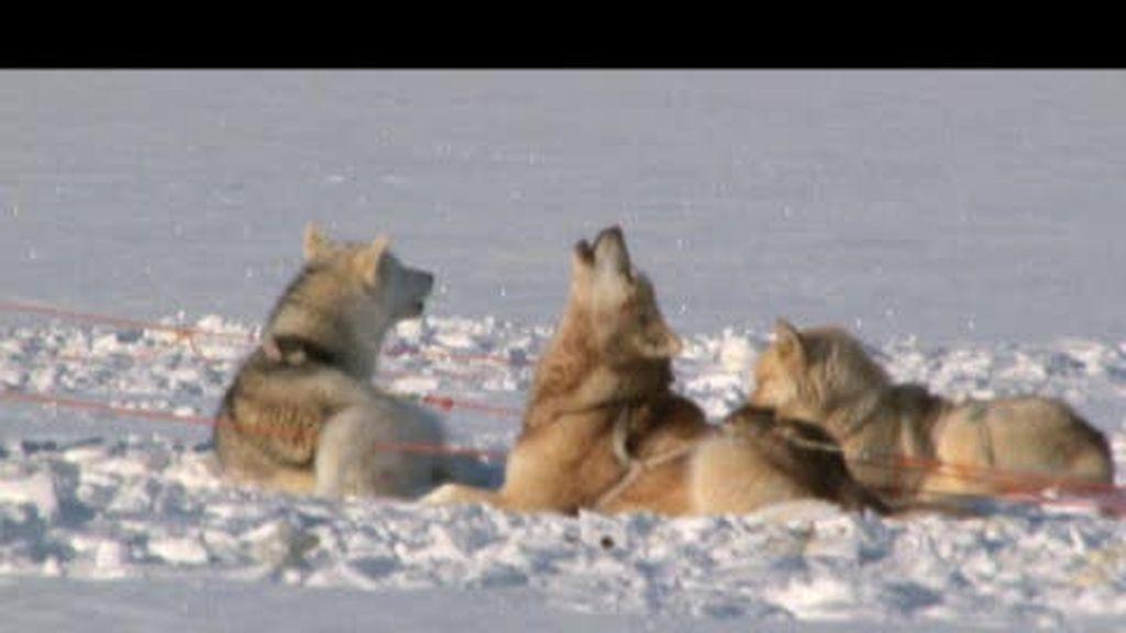 Promo Desafío Extremo: Groenlandia segunda parte