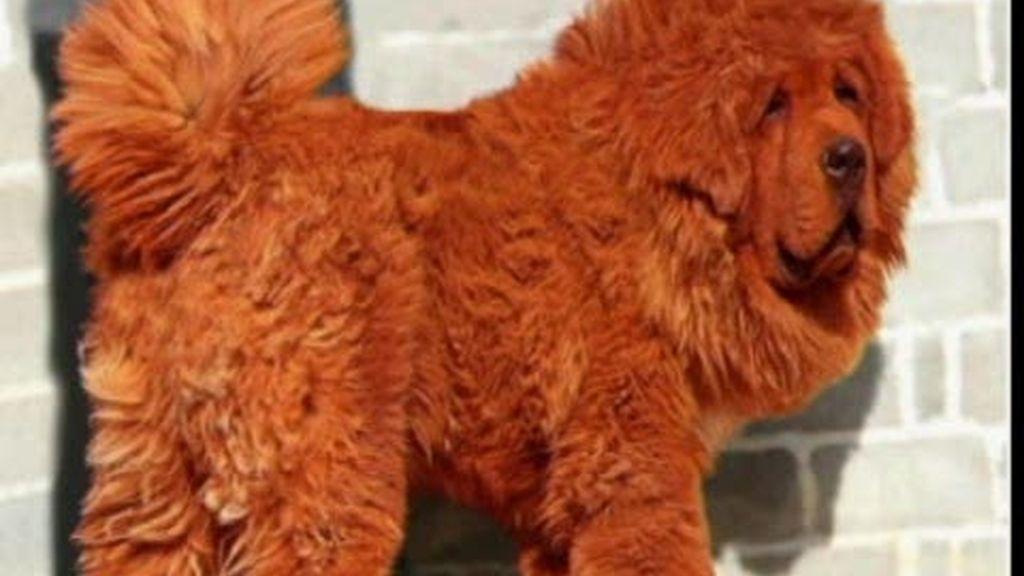 El perro más caro