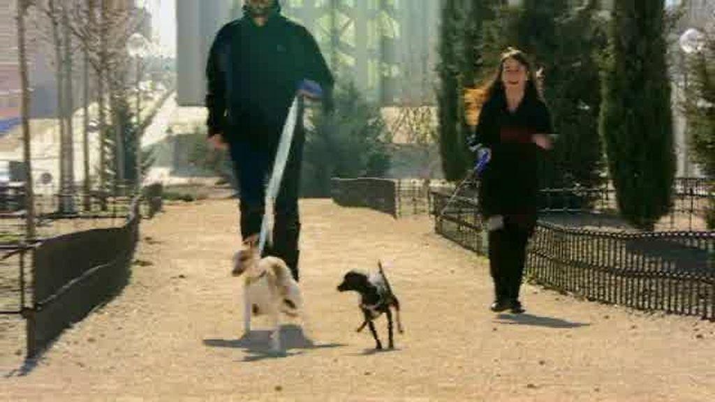 Promo Malas Pulgas. A los perros les encanta el fútbol