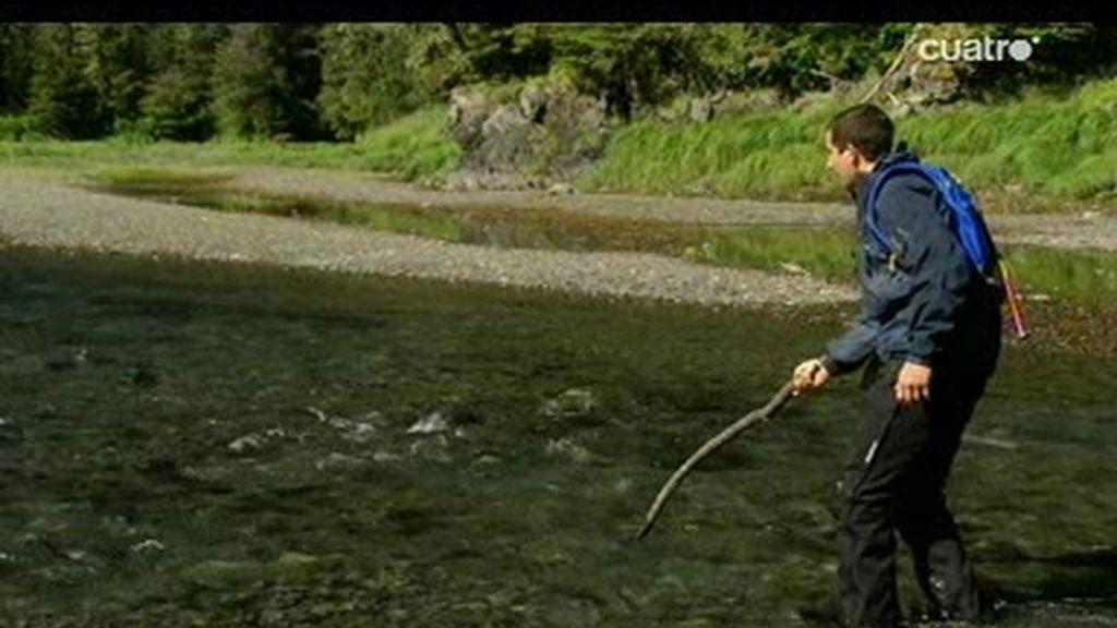 Montañas de Alaska: ¿Cómo pescar un salmón sin caña de pescar?