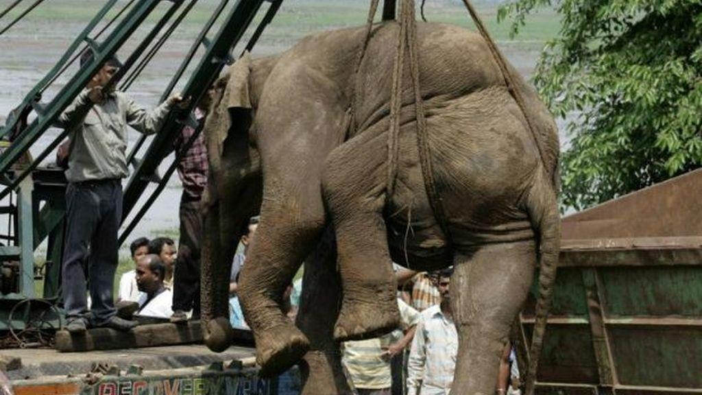 El salvamento del elefante