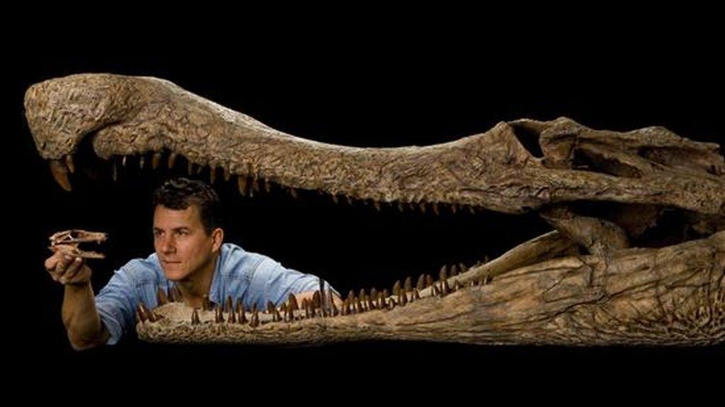 Descubren los restos de cinco cocodrilos de 100 millones de años en el Sahara