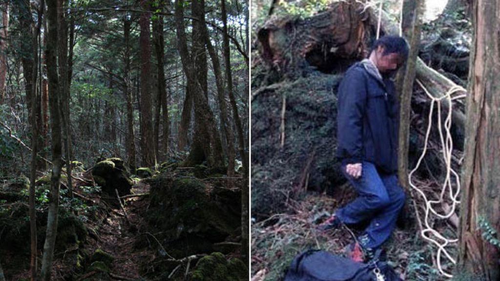 Aokigahara, Japón. El bosque de los suicidios