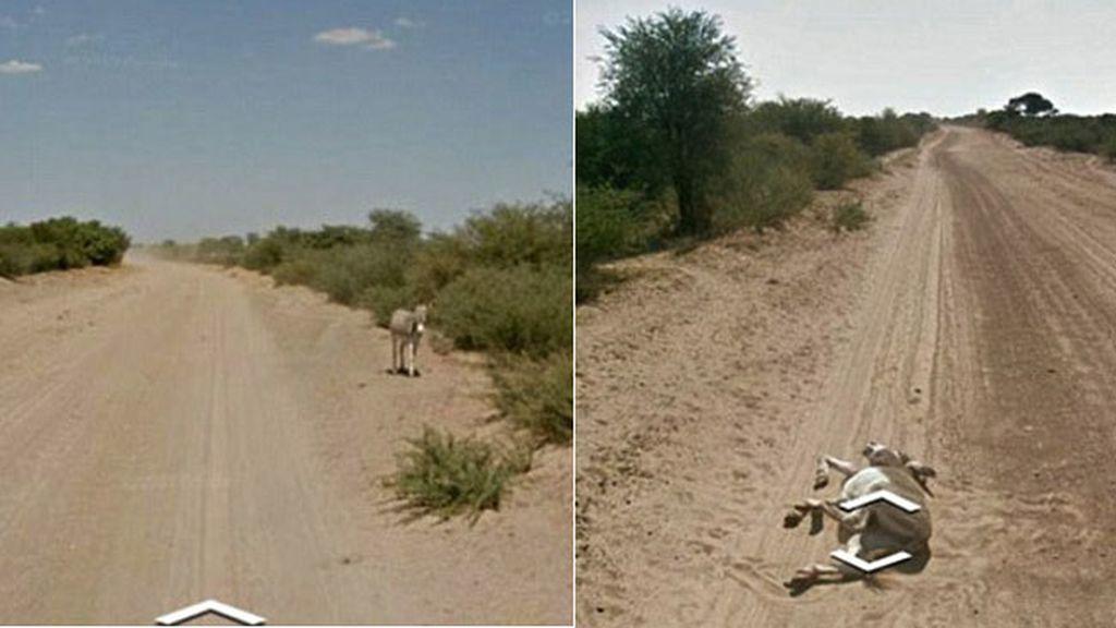 burro google street view