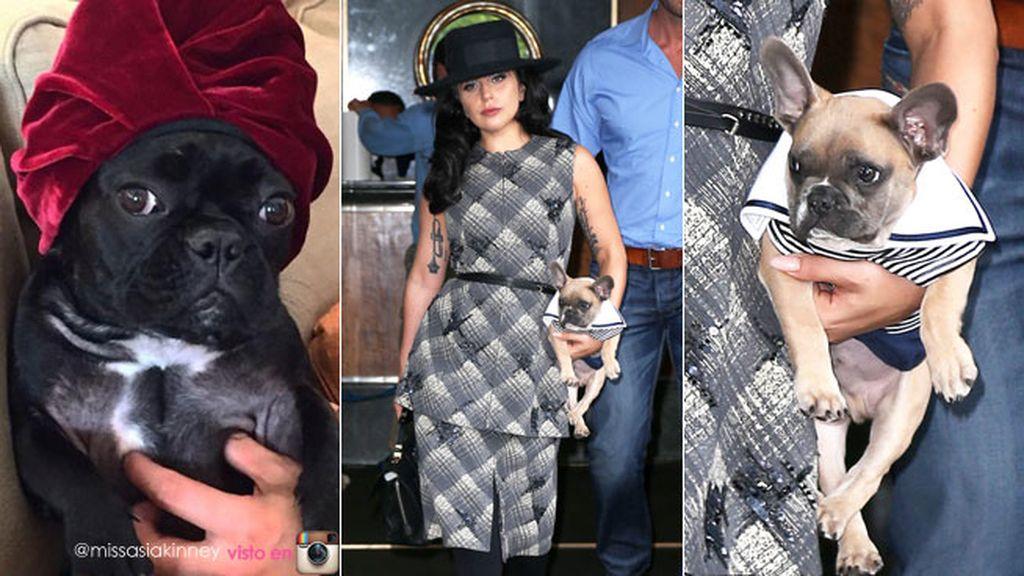 fashionpets