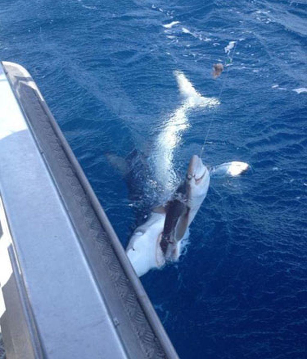 La lucha entre el pescador y el tiburón. Foto: Reddit