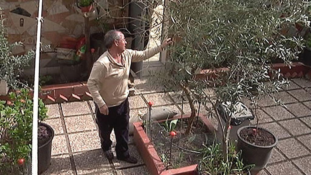 Algunos mostoleños también disfrutan de maravillosos jardines