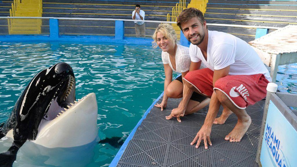 Románticas vacaciones entre ballenas