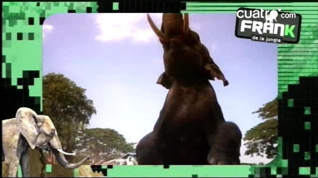 AVANCE: Frank y los elefantes