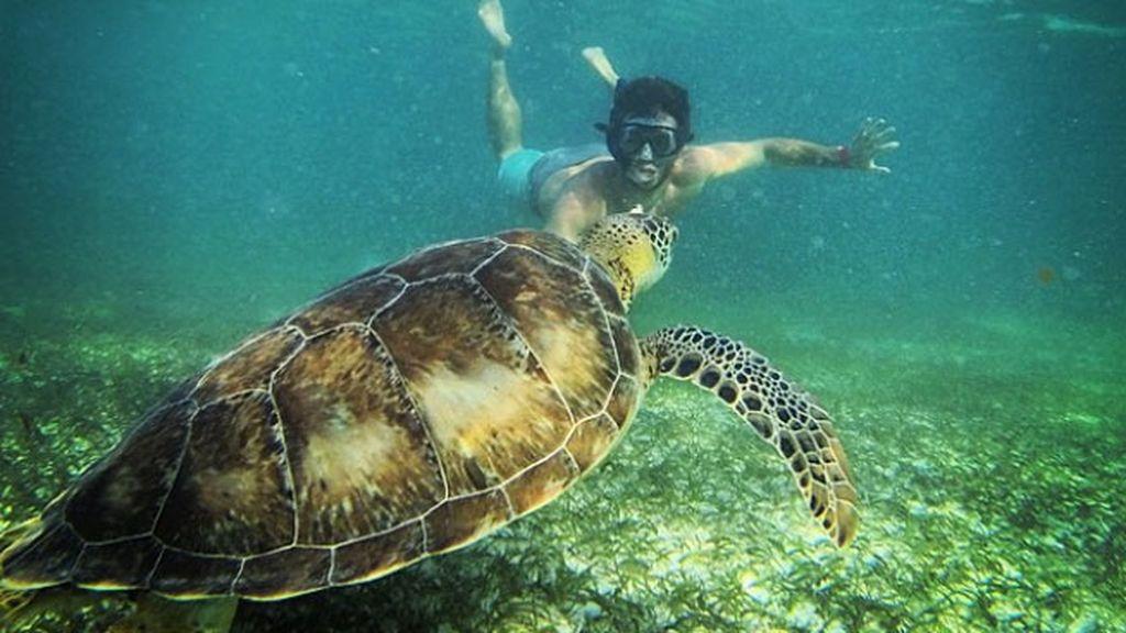 Buceando por Méjico encuentra  tortugas como esta