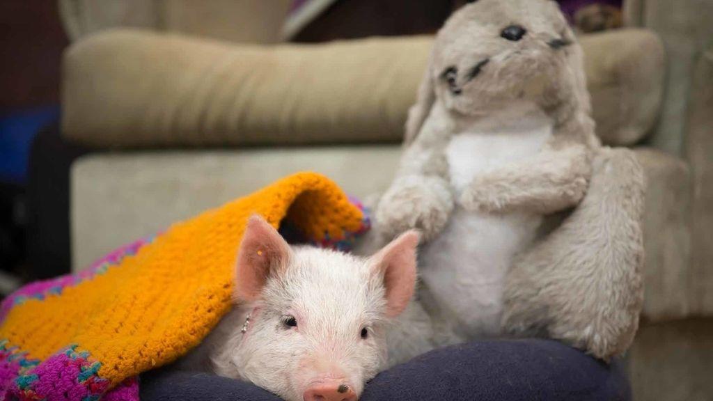 Amistad incondicional entre animales y peluches