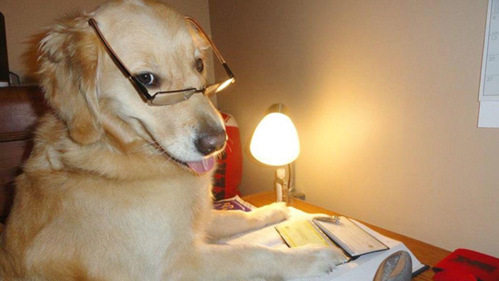 Diviértete con los atuendos más humanos de este perro