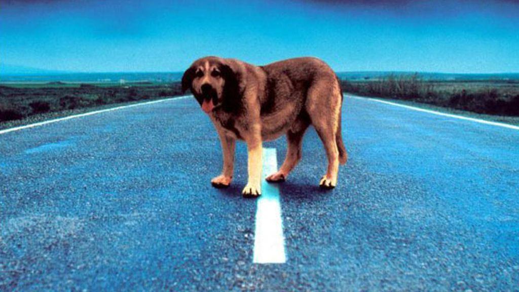 El Código Penal se endurece para quien abandone a su mascota