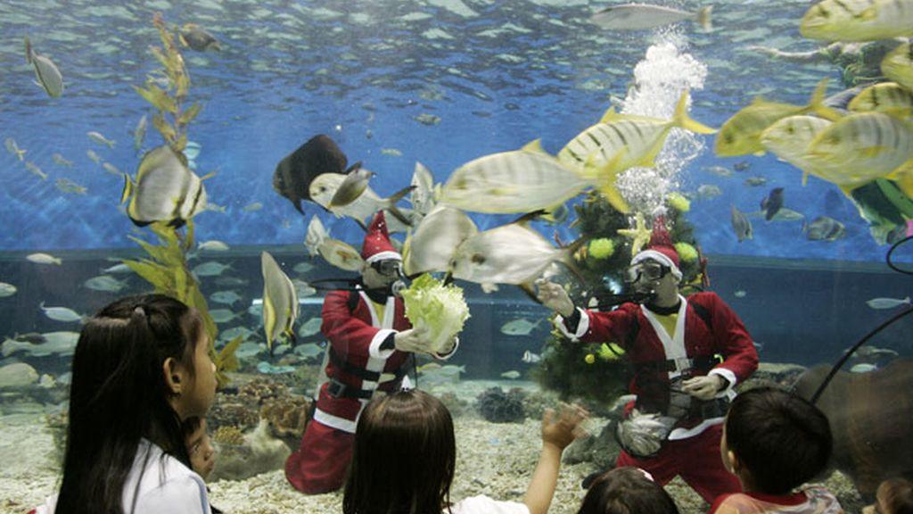La Navidad acuática