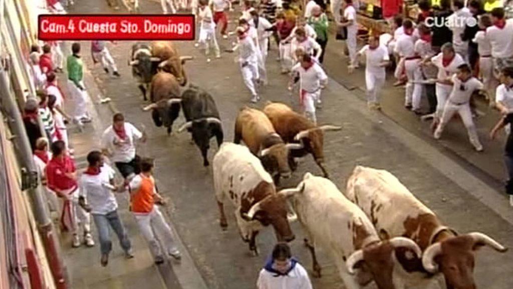 La manada agrupada en Santo Domingo