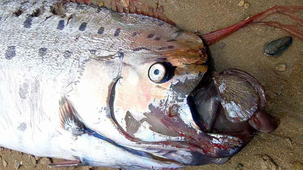 Es un pez mítico que habita en las profunidades del mar