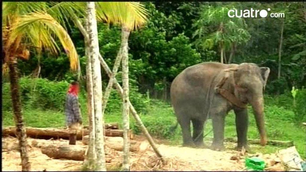 Viaje a lo desconocido: elefantes ilegales... y hojas de coca
