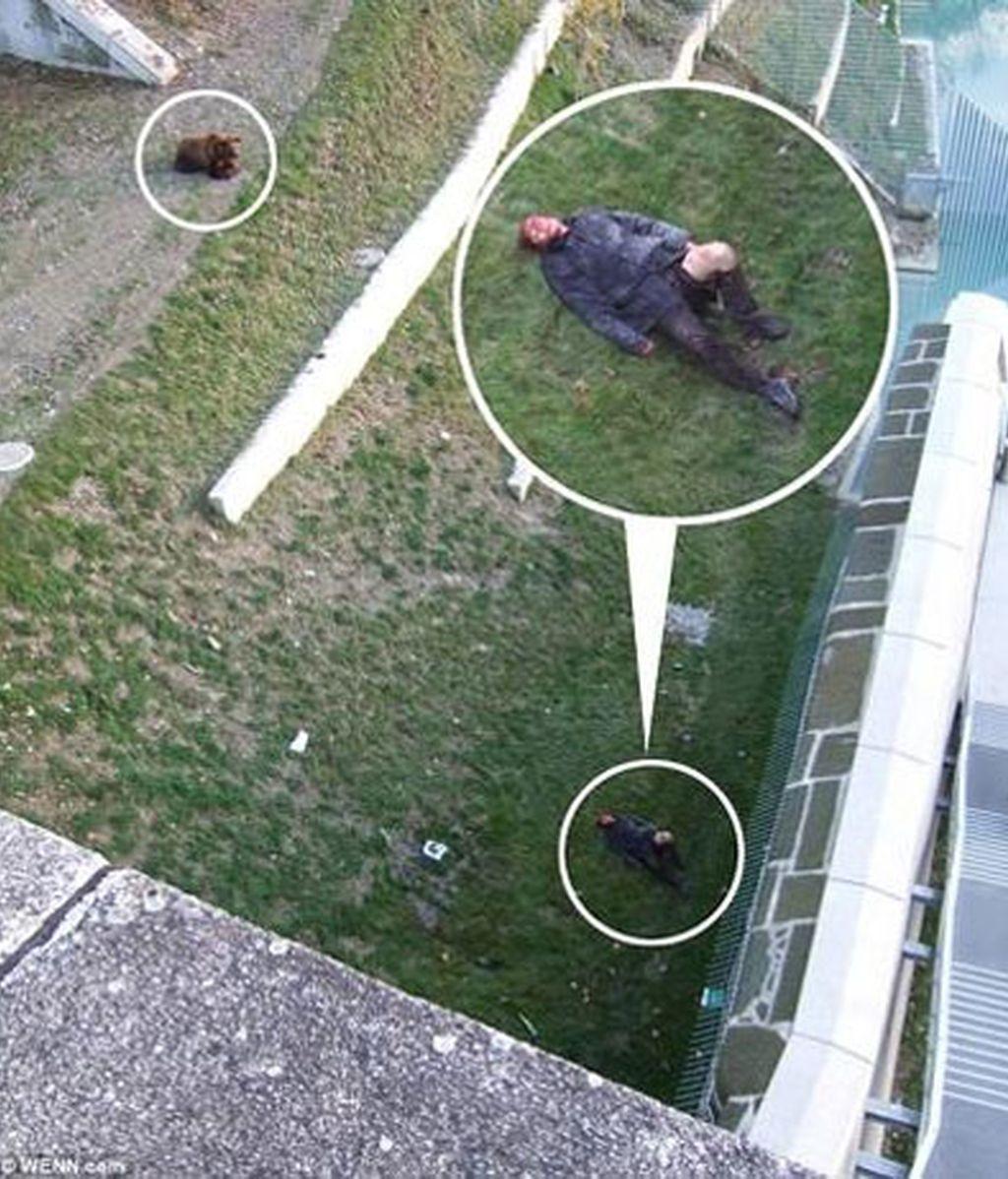 el oso resultó herido de un disparo