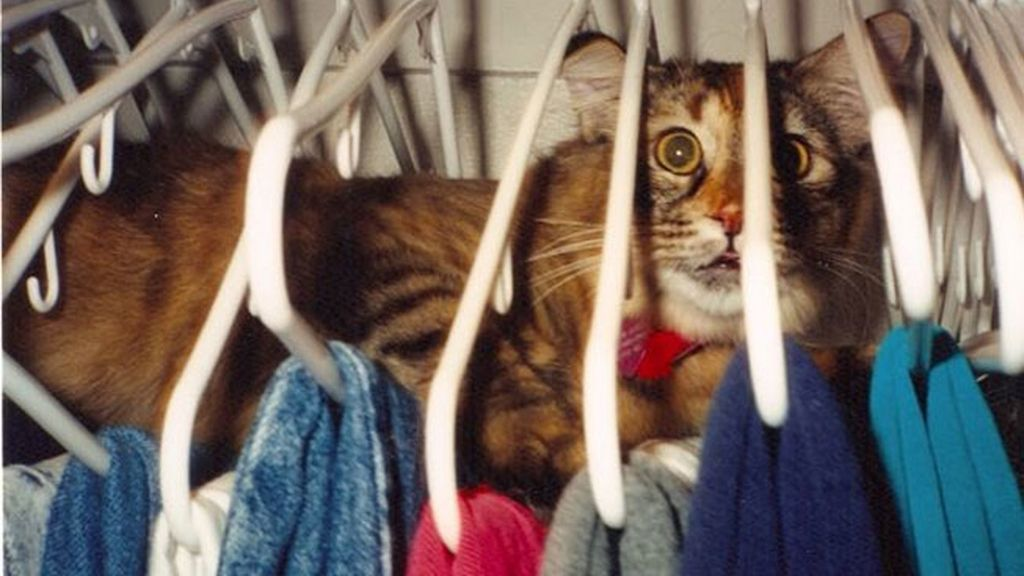 'Creo que he visto un lindo gatito'