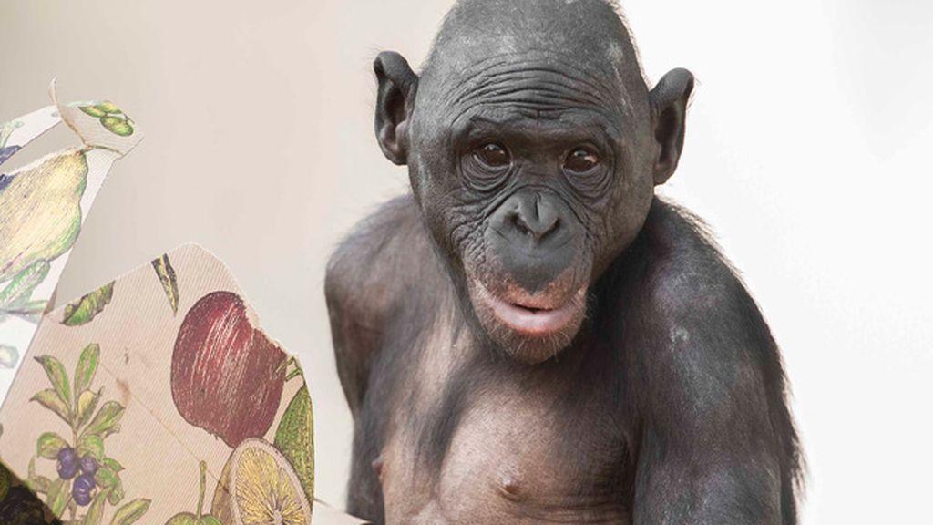 Retratos íntimos en el zoo