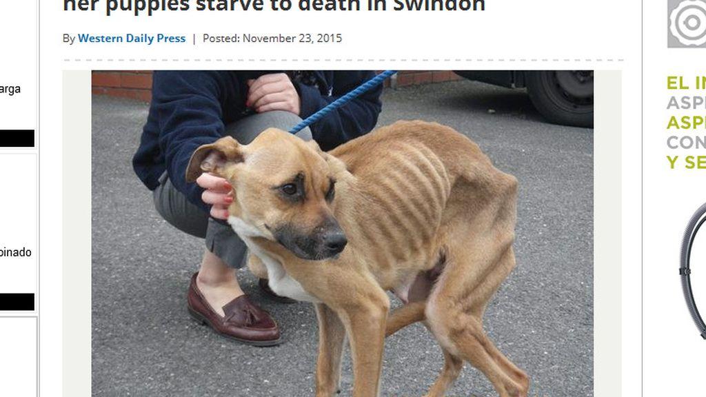 Condenado por no cuidar a sus perros