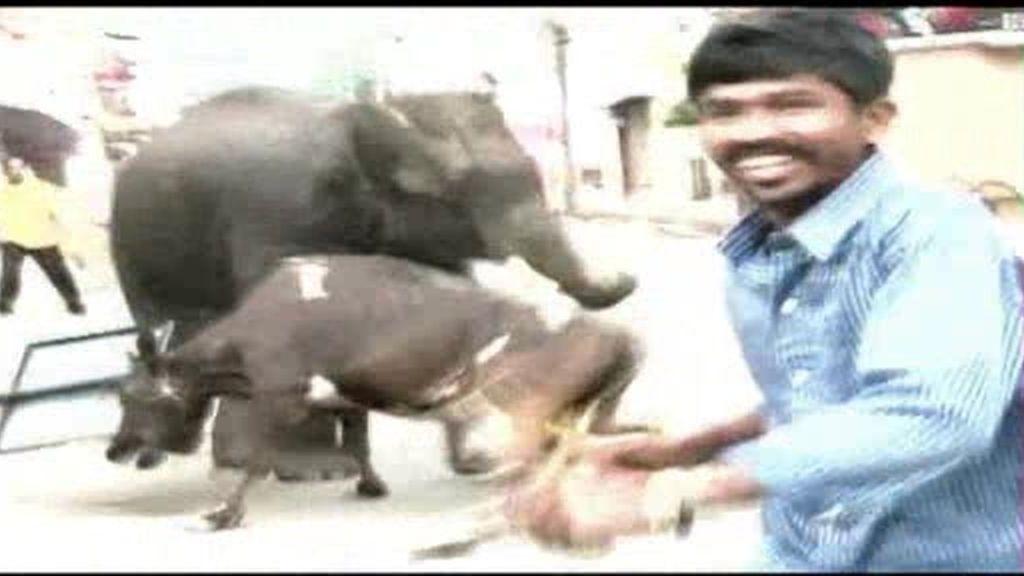 Dos elefantes provocan el pánico