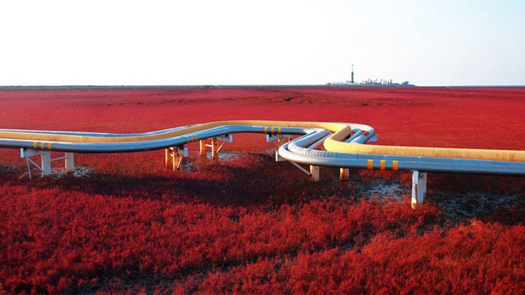 Red beach, Panjin, China