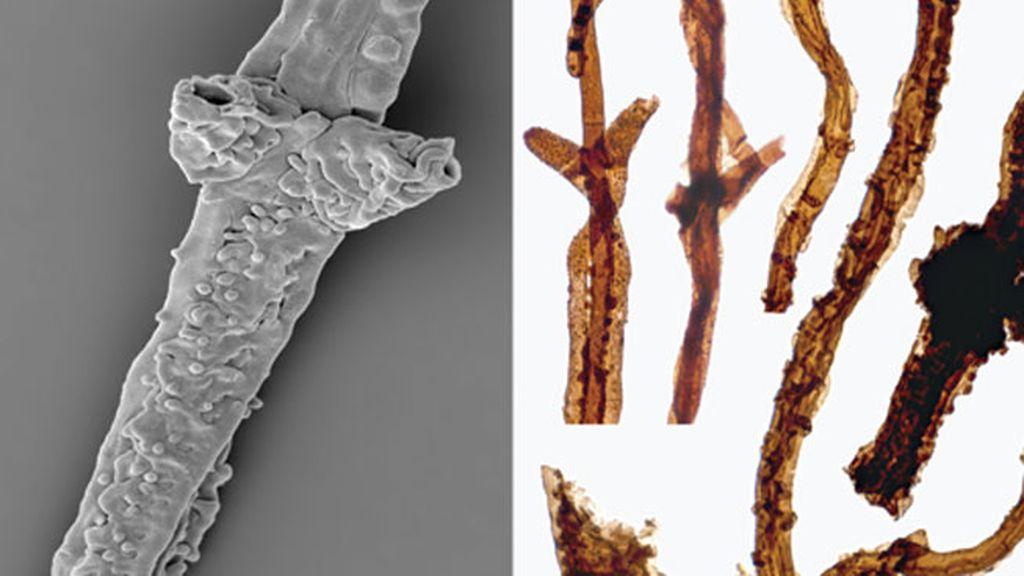 El fósil más antiguo