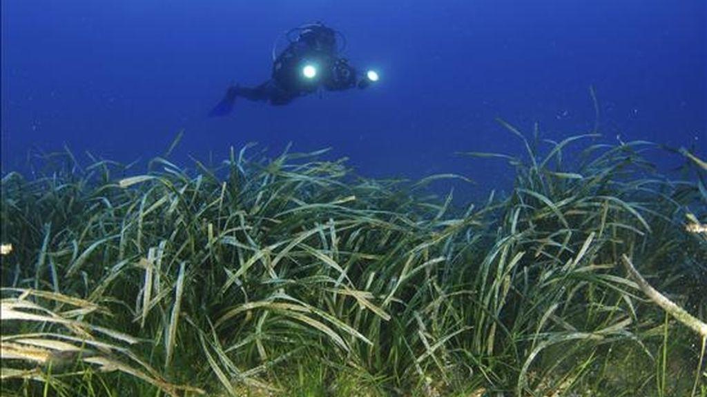 """Cámara de Oceana filmando una pradera mixta de """"Cymodocea nodosa"""" y """"Posidonia oceanica"""" en el área de Punta Entinas-El Sabinar, frente a las costas de Roquetas de Mar (Almería). EFE/Archivo"""