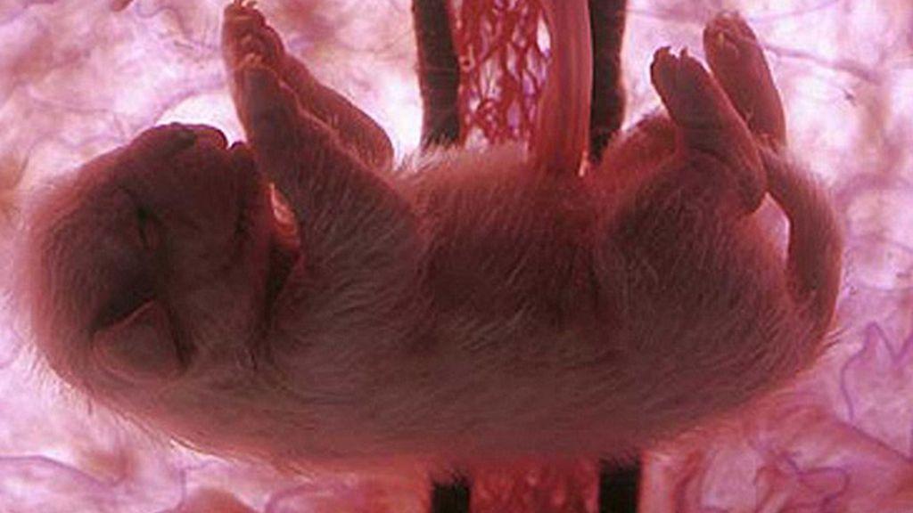 Impresionantes imágenes de animales en el útero materno
