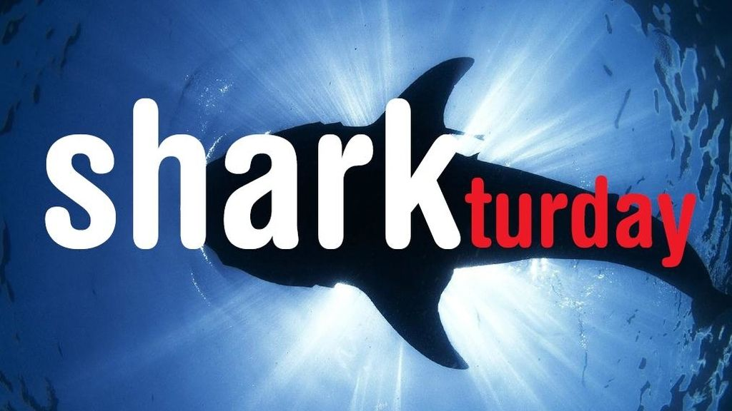 Sharkturday en Cuatro