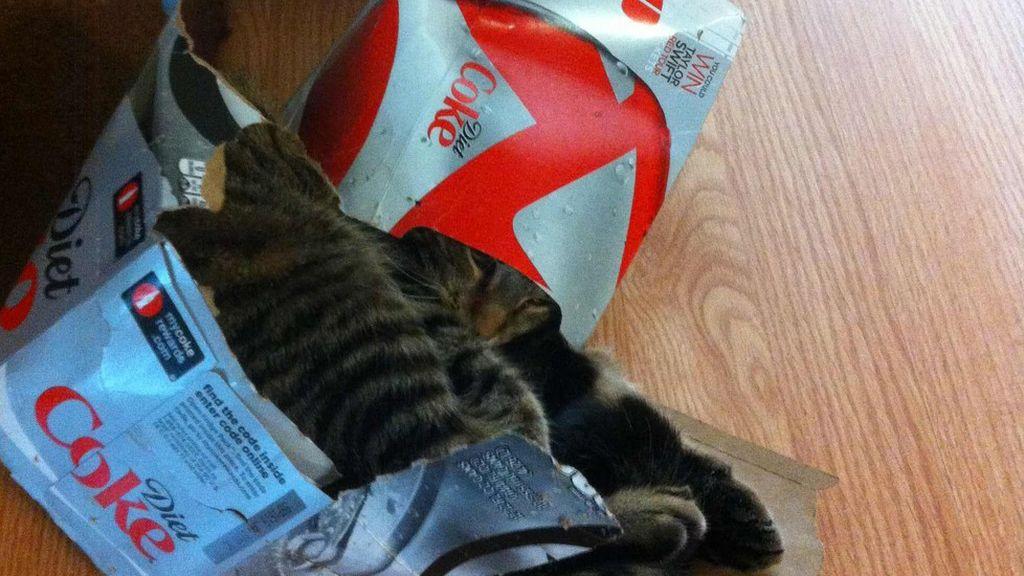 Los gatos se sienten seguros y cómodos cuando se esconden entre cartones