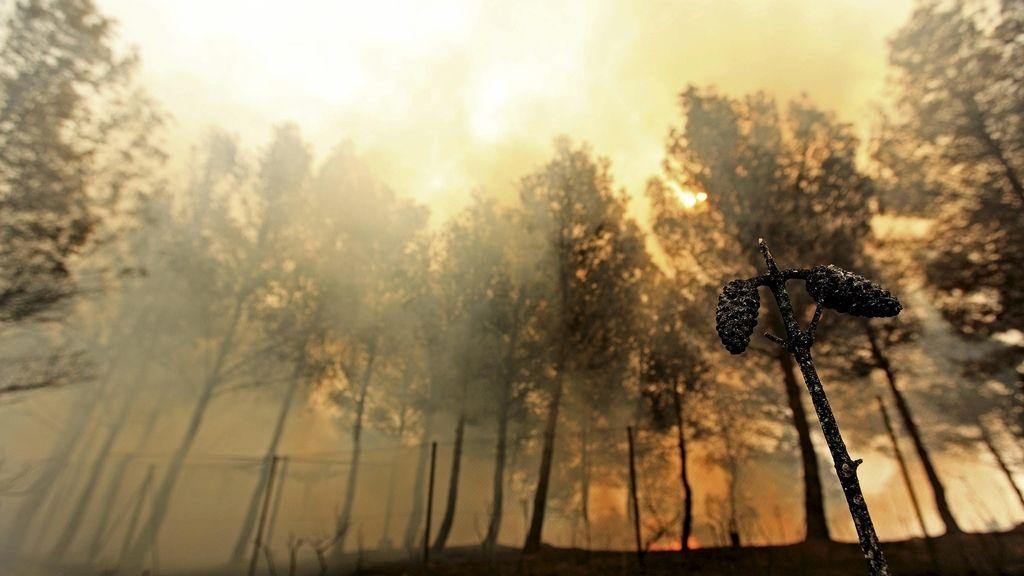 Imágenes de los incendios en Valencia