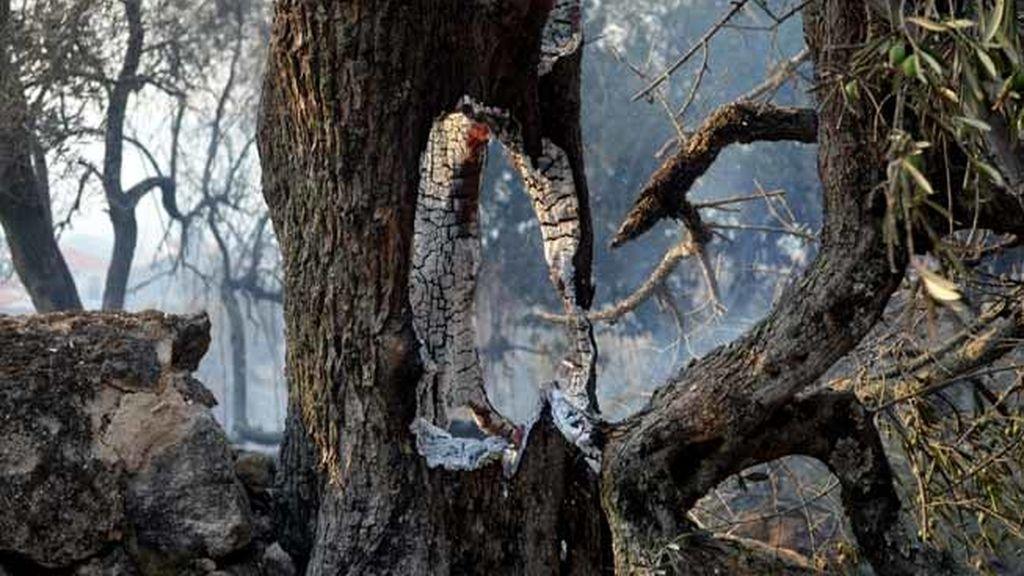 Incendio en Sierra de gata, Cáceres