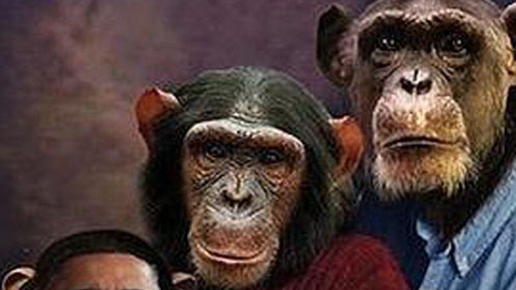 La foto de la polémica en la que aparece el presidente de EEUU, Barack Obama como un chimpancé.