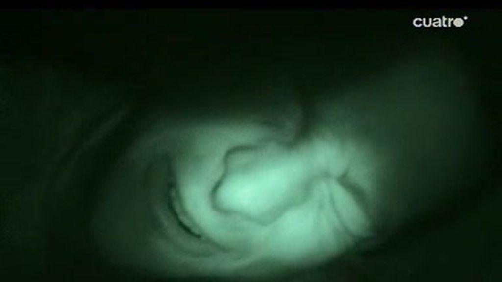 Costa Rica: Bear Grylls sufre una fuerte diarrea nocturna