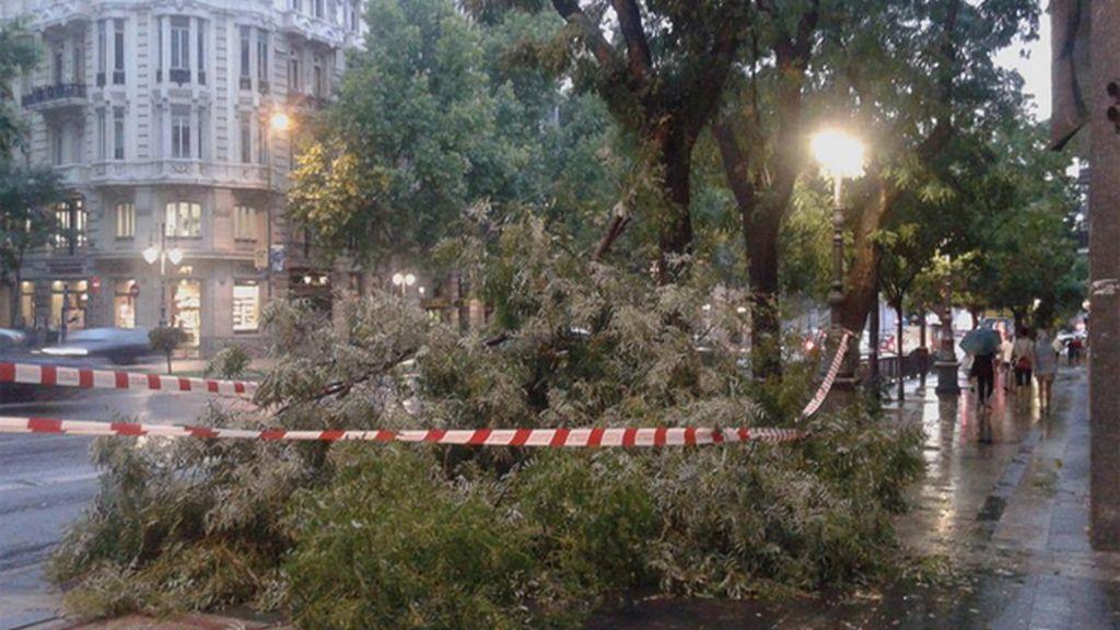 Bomberos trabajan para retirar ramas caídas por la tormenta en Madrid