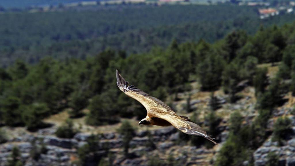 El cañón de Ríos Lobos es la vista favorita de Carlos Chamarro