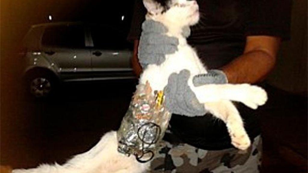 Utilizan un gato adiestrado para traficar en una cárcel de Brasil