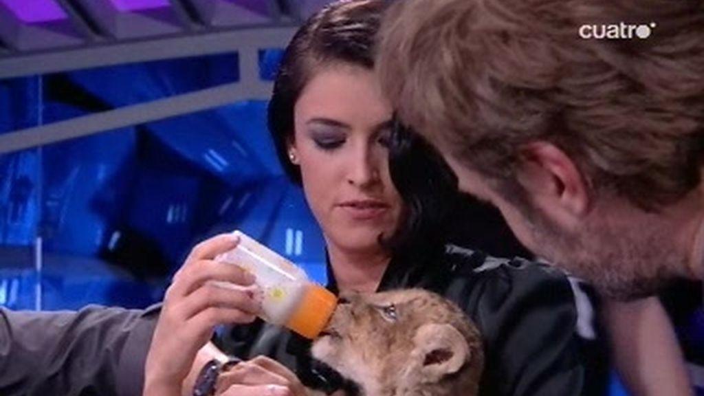 Blanca y Tristán dan de comer a un león y un pingüino