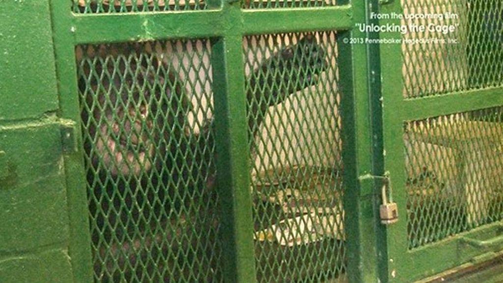 Tommy,chimpancé,derechos de los chimpancés,