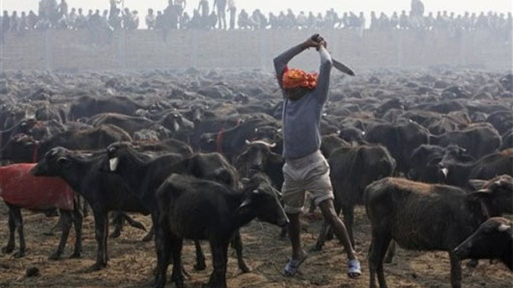 Masivo sacrificio de animales