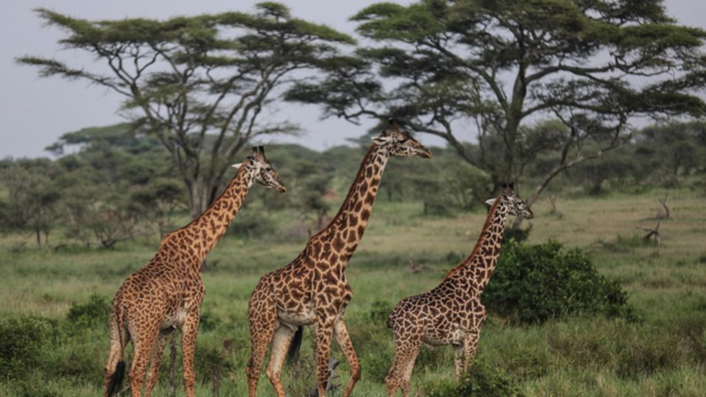 Tanzania (de 45 a 55 años)