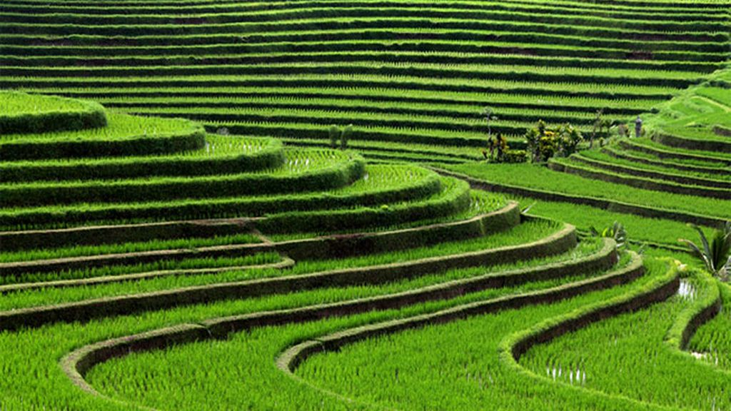 Terrazas de arroz, Bali, Indonesia