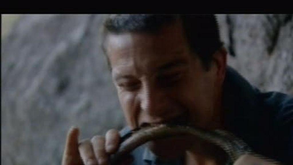 Texas: ¿A qué sabe una serpiente cascabel?