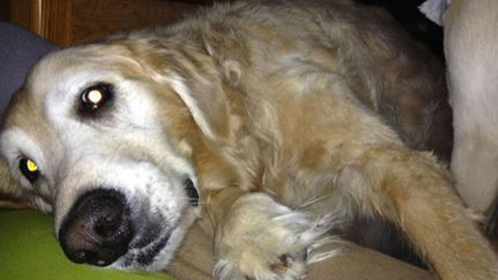 Así es el emotivo homenaje de un dueño a su perro fallecido por un tumor