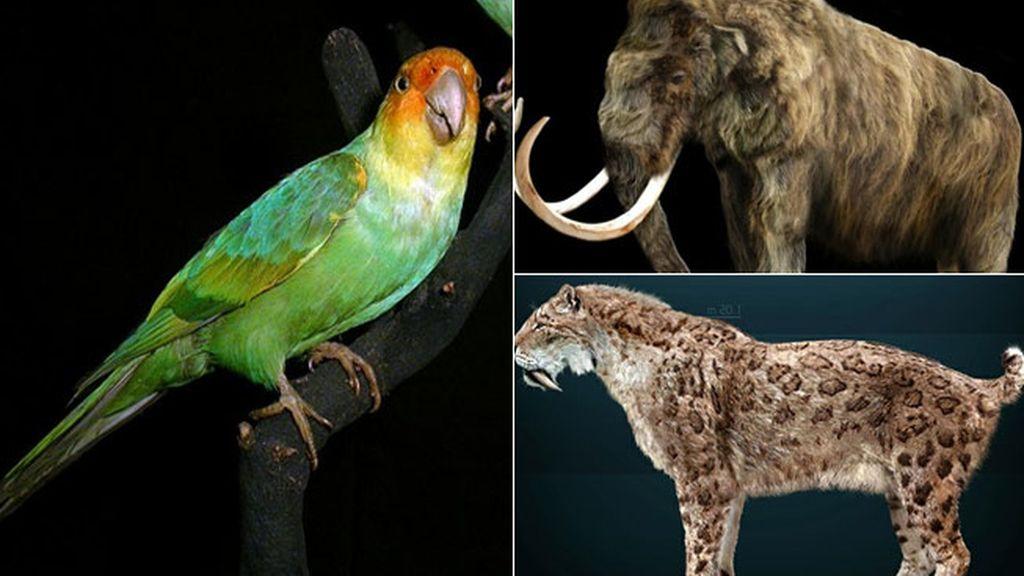Las especies de animales que científicos quieren 'resucitar'