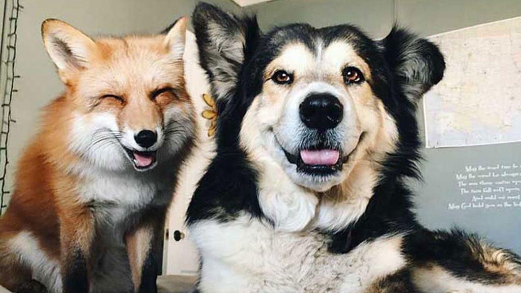Un perro y un zorro, los mejores amigos