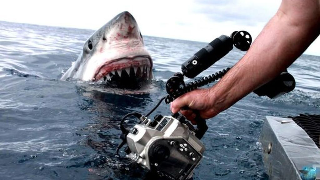 Fotografía de un tiburón blanco en Australia
