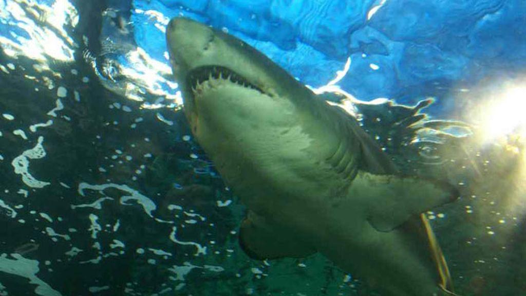 Jesús Calleja: Tiburón Blanco